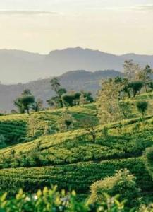 Шри-Ланка-1