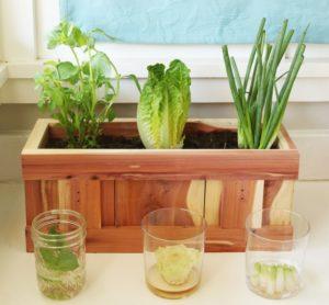 Как вырастить зелень на подоконнике из обрезков.
