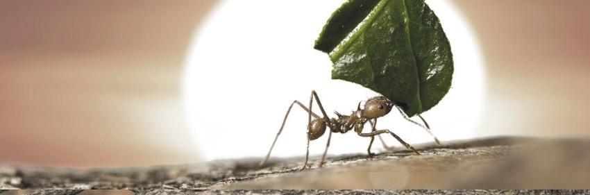 тотем муравей