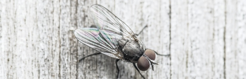 тотем муха