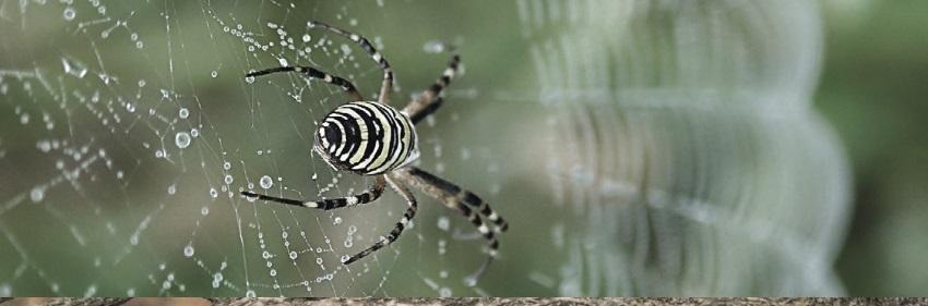 тотем паук