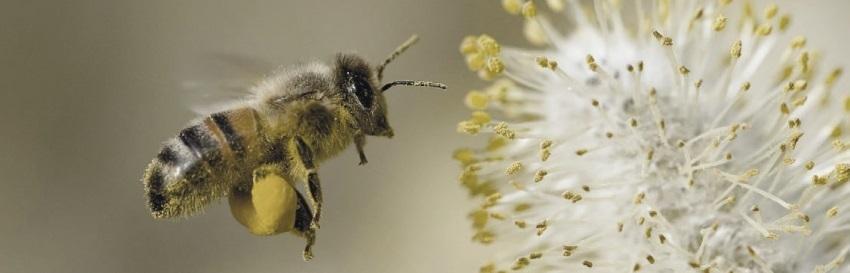 тотем пчела