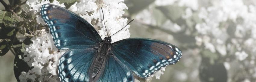 тотем бабочка