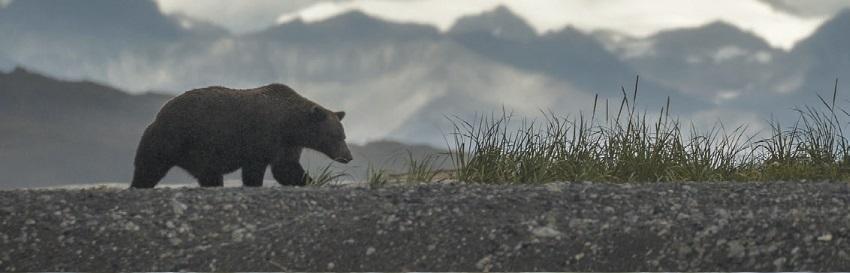тотем медведь